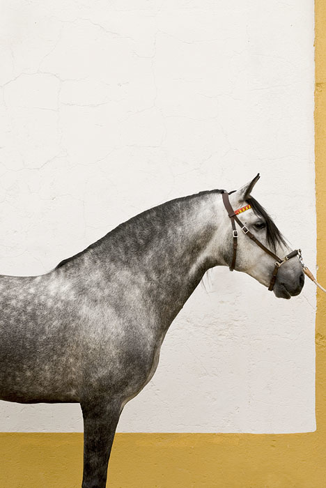 Stefano Scatà Food Lifestyle and Interiors photographer - Ervideira's Lusitan Horses